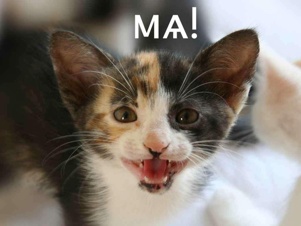 Котёнок знает, как будет «азъ» в винительном падеже